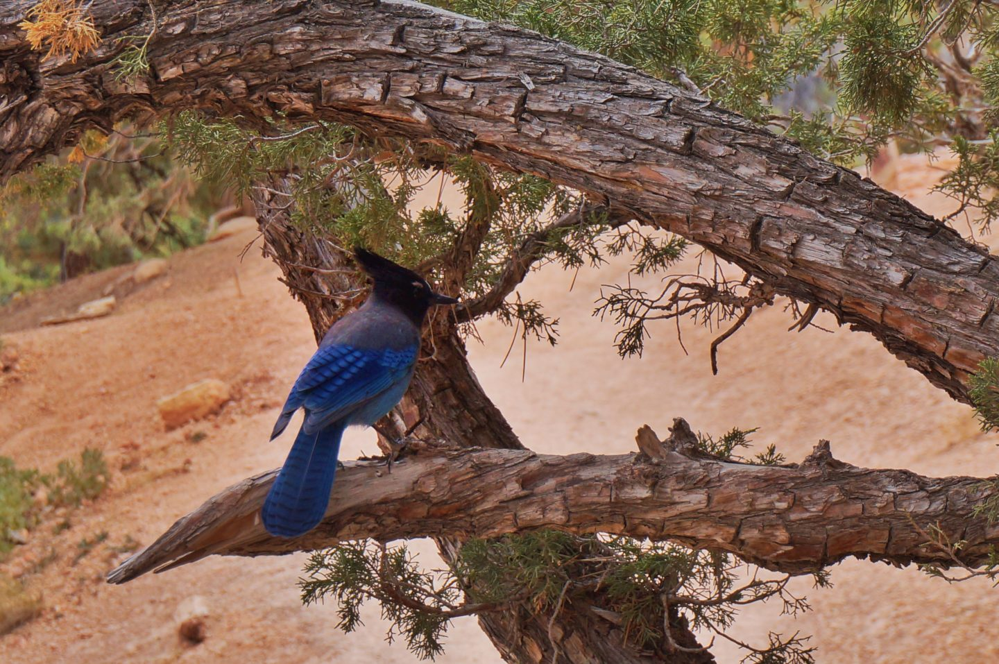 tiere bryce canyon